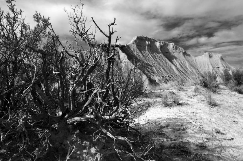 lost-in-bardenas-navarra-bush